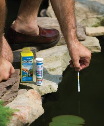 The Most Effective Tips for Koi Pond Maintenance