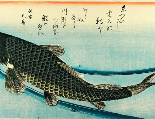 History of Koi Ponds
