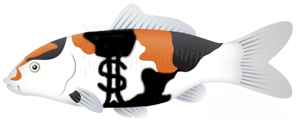 How to Breed Koi for Profit