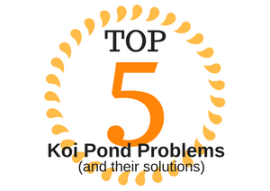 Top 5 Most Common Koi Pond Problems (and their Solutions)