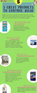 5 Best Products for Getting Rid of Pond Algae