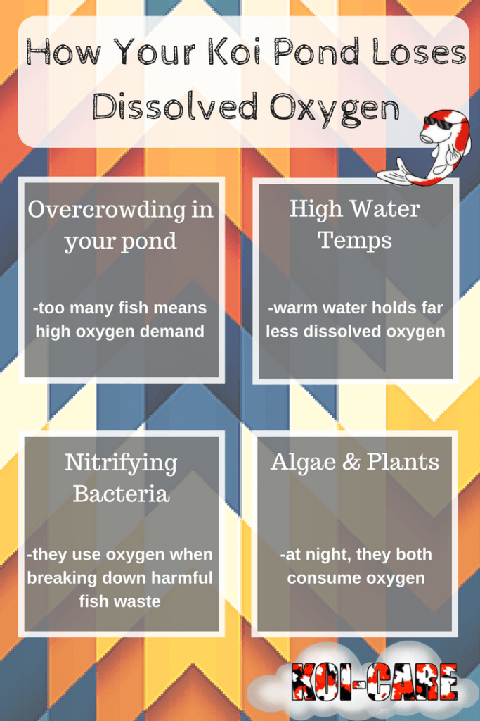 How Your Koi Pond Loses Dissolved Oxygen
