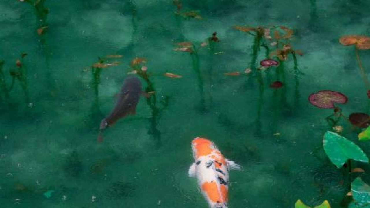 What Are The Ideal Water Conditions For Healthy Koi