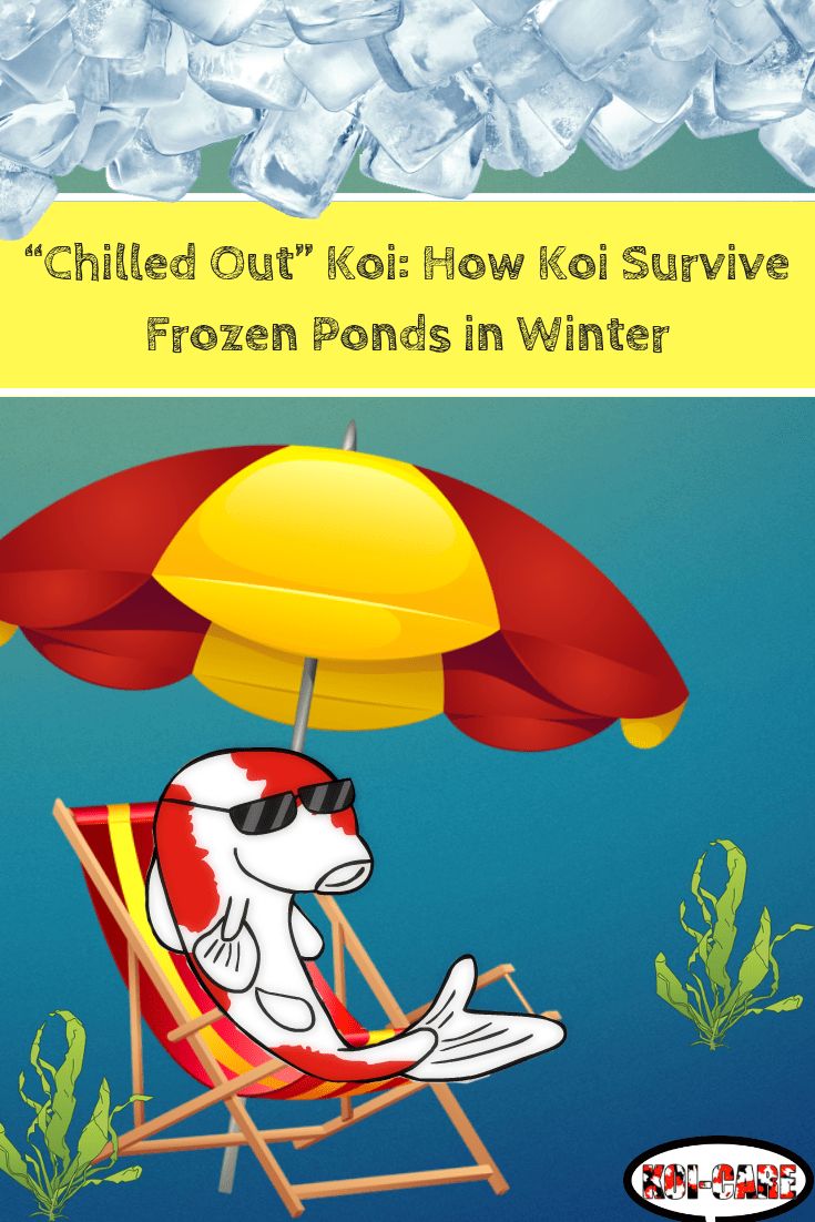 How Koi Survive Frozen Ponds in Winter