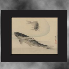 antique-koi-art-black-mat-web