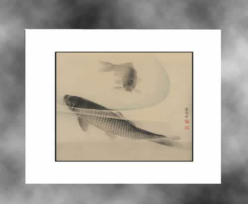 antique-koi-white-mat-web