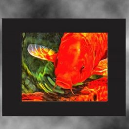 orange-koi-art-black-mat-copy