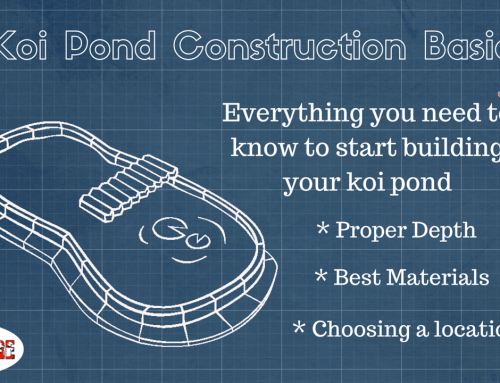 Koi Pond Construction: The Basics of Building your Pond