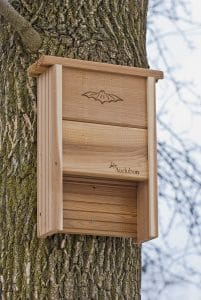 brown bat house