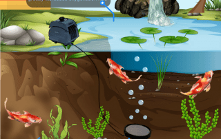 Importance of Koi pond Aeration