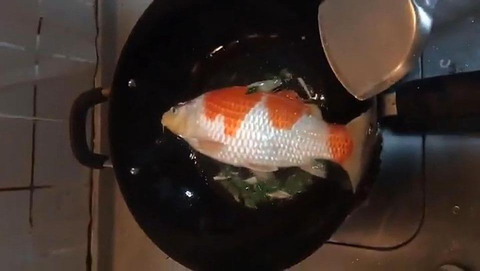 cooked up koi