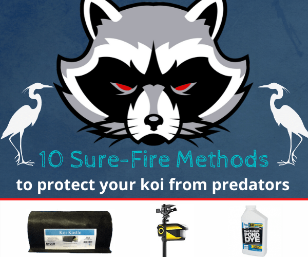10 Sure-Fire Methods to protect koi pond from predators