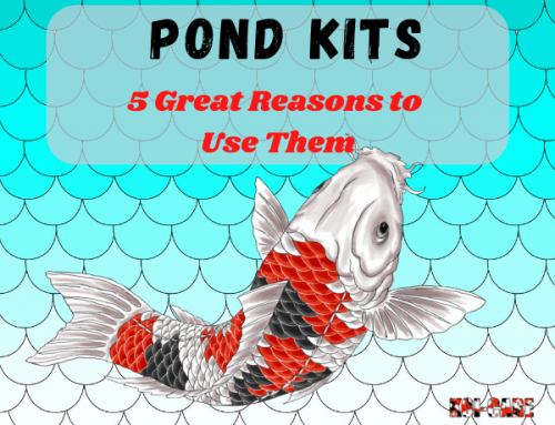 5 Great Reasons to Get a Pond Kit