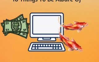 Buying Koi Online_ 10 things To Be Aware Of