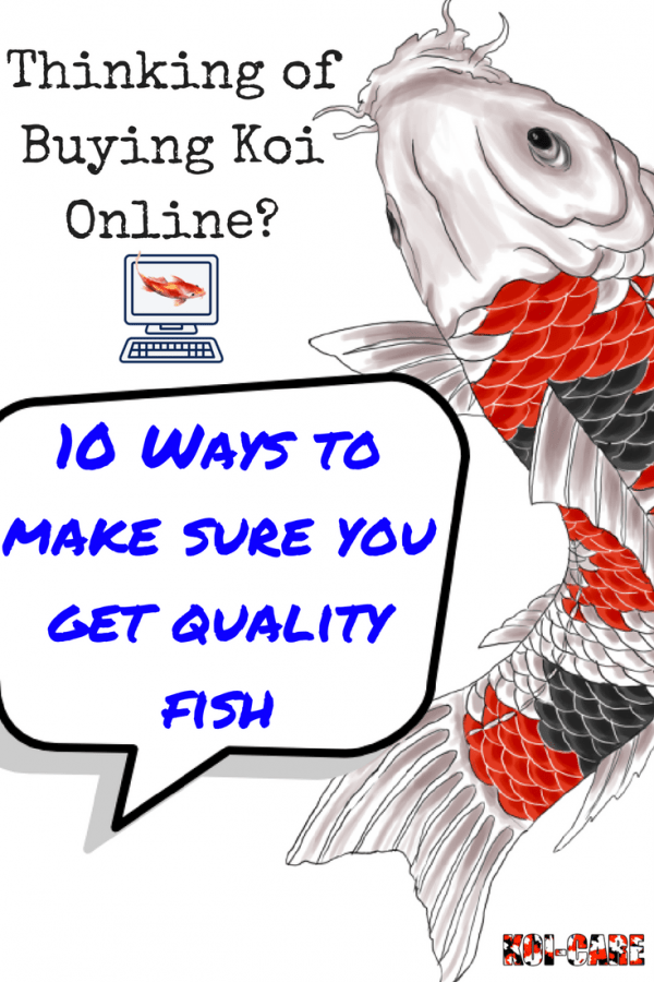 The most effective tips for koi pond maintenance for Buying fish online