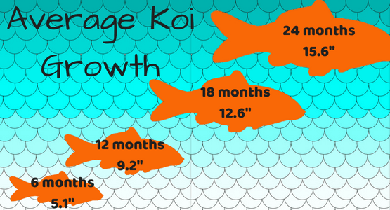 Average Koi Growth