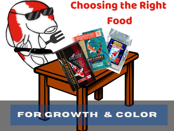 Choosing the Right Food for Growth & Color